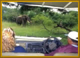 Experience spectacular viewing of Elephants